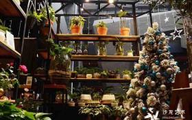 圣诞会员福利丨寻找雾霾中的绿野仙踪