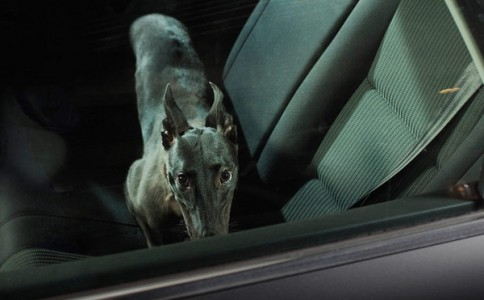 Martin Usborne 单身狗的孤独摄影集