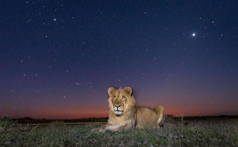星空下野性毕露!非洲动物的半暝仔外拍