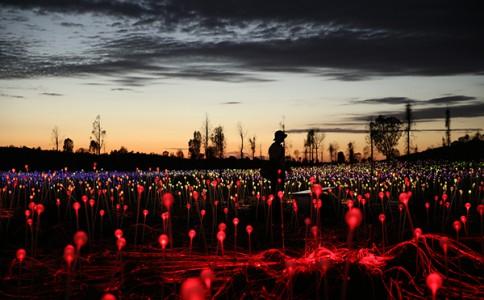 Amazing Work! 英国艺术家Bruce Munro的光之原野点亮苍穹