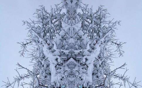 雪地里不为人知的精灵族